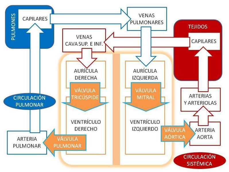 Circulación trastornos arterial la de